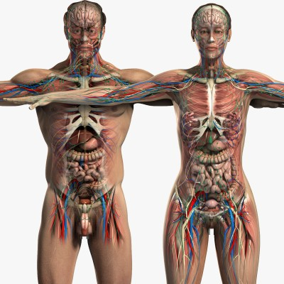 Human-Male-And-Female-Anatomy